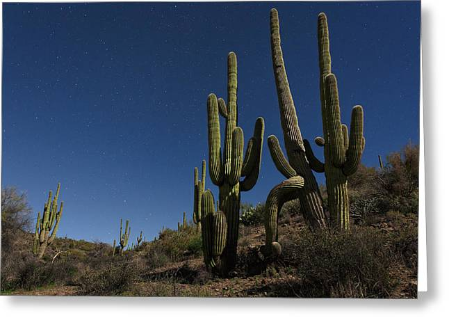 Saguaro Cactus Greeting Cards - Tonto National Forest Greeting Card by Rick Berk