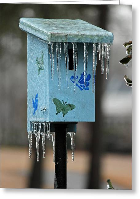 Bluebird Posters Greeting Cards - Too Cold for Bluebirds Greeting Card by Suzanne Gaff