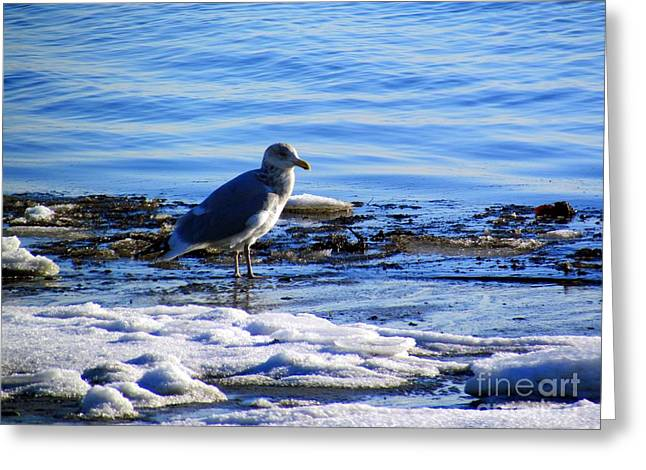 Boston Ma Greeting Cards - Too Cold to Fly Greeting Card by Elizabeth Dow