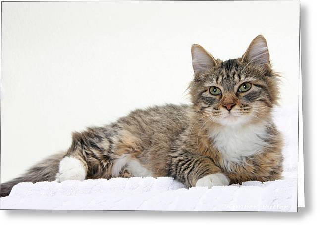 Kitten Prints Greeting Cards - Too Cute Tabby  Greeting Card by Kimber  Butler