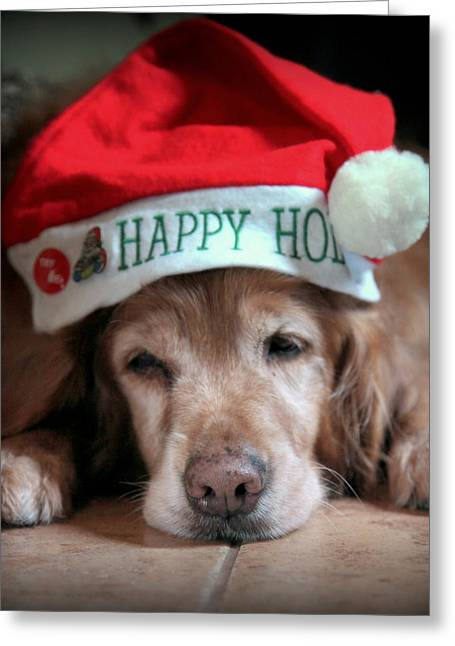 Dog Photographs Greeting Cards - Too Much Eggnog Greeting Card by Karen Wiles