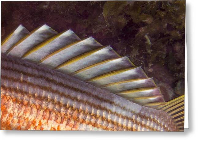 Scuba Diving Greeting Cards - Top Fin Design Greeting Card by Jean Noren