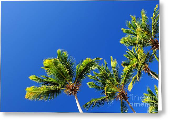 Selective Color Pyrography Greeting Cards - Top nature palm Greeting Card by Boon Mee