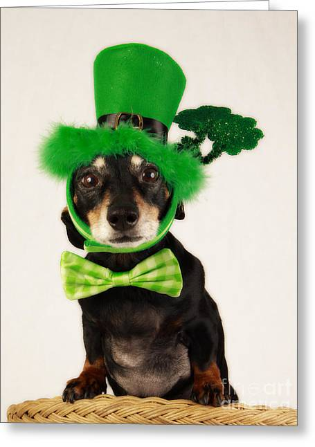 Recently Sold -  - Lucky Dogs Greeting Cards - Top O The Mornin To Ya Greeting Card by Denise Oldridge