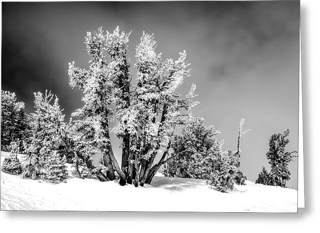 Morning In A Pine Forest Greeting Cards - Trees on top of Mountain Greeting Card by Maria Coulson