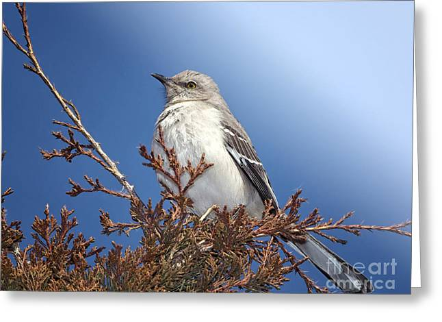 Mockingbird Greeting Cards - Top of My Game Greeting Card by Betty LaRue