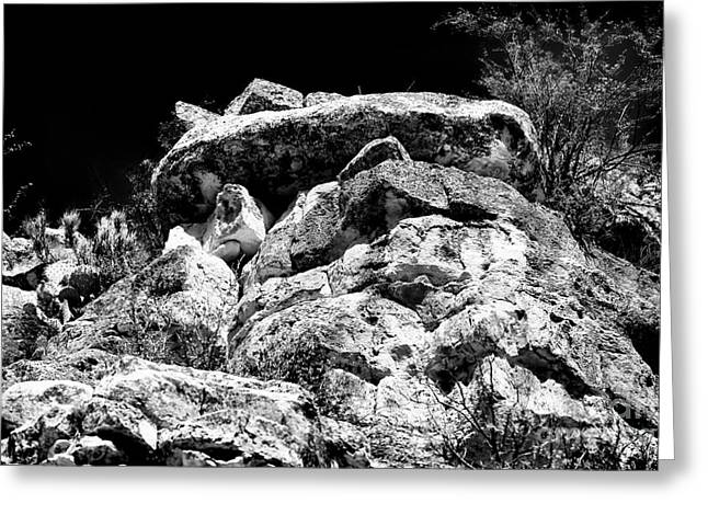 Forest Dweller Greeting Cards - Top of the Cliff Greeting Card by John Rizzuto