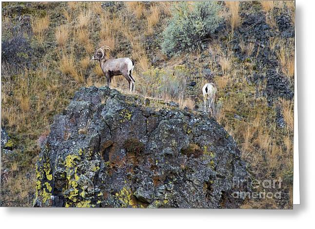 Yakima River Greeting Cards - Top of the Rock Greeting Card by Mike  Dawson