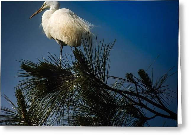Stork Greeting Cards - ON TOP of the WORLD Greeting Card by Karen Wiles