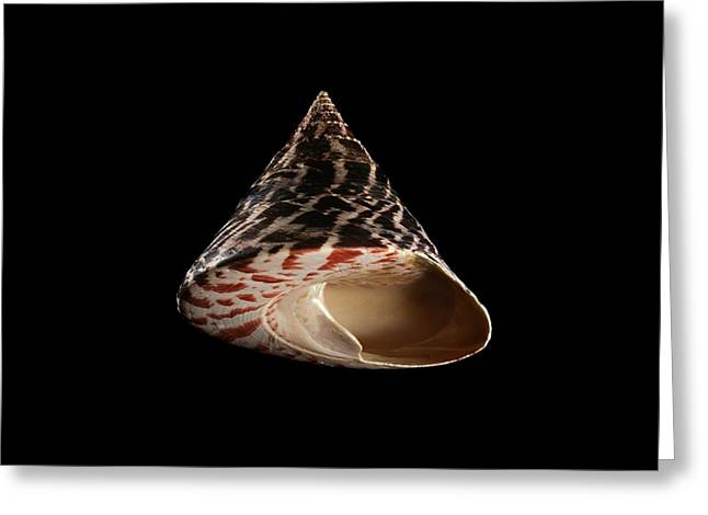 Top Snail Shell Greeting Card by Gilles Mermet