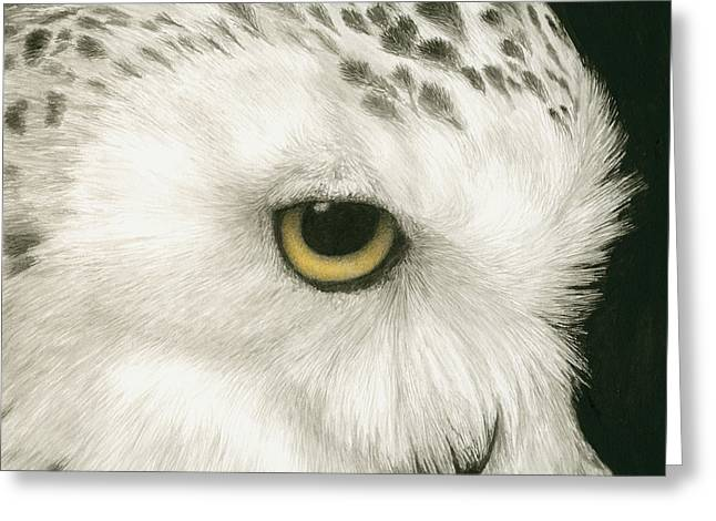 Snowy Owl Greeting Cards - Topaz in the Snow Greeting Card by Pat Erickson