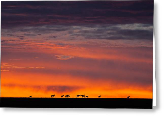 Silhoette Greeting Cards - Topi Herd Sunrise Greeting Card by Mike Gaudaur