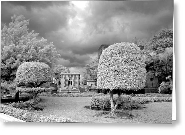 Ghostly Photographs Greeting Cards - Topiary Greeting Card by Terry Reynoldson