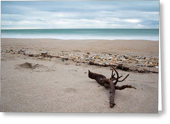 Driftwood Beach Greeting Cards - Topsail Island Driftwood Greeting Card by Shane Holsclaw