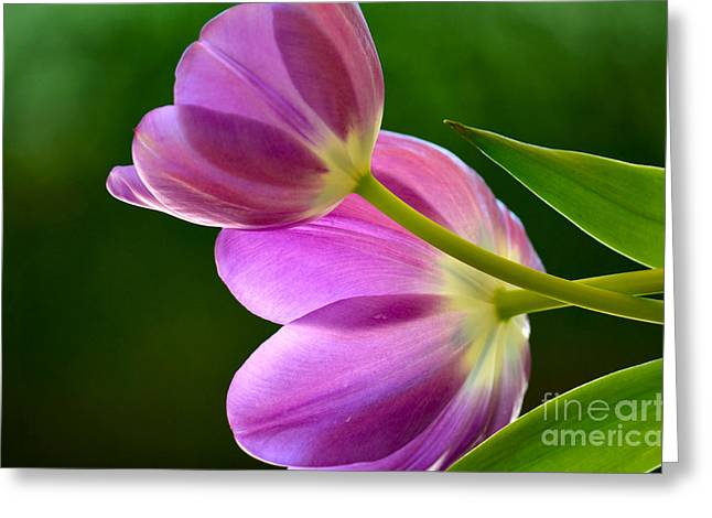 Close Focus Floral Greeting Cards - Topsy-Turvy Tulips Greeting Card by Deb Halloran