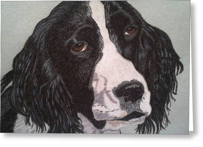 Spaniel Drawings Greeting Cards - Torch- English Springer Spaniel Commission Greeting Card by Anita Putman