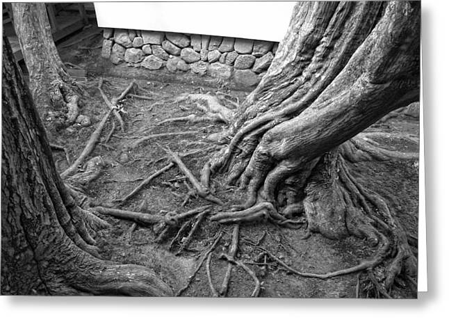 Tree Roots Greeting Cards - TORMENTED TREES of JAPAN Greeting Card by Daniel Hagerman