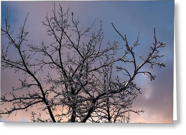 Colorful Cloud Formations Greeting Cards - Icy Branches Sunset Greeting Card by Georgia Mizuleva