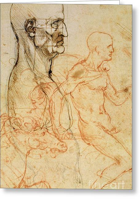 Proportions Greeting Cards - Torso of a Man in Profile Greeting Card by Leonardo da Vinci