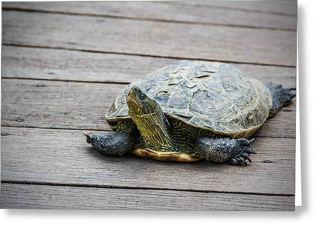 Aquatic Greeting Cards - Tortoise on a Wooden Bridge Greeting Card by Francesco Rizzato