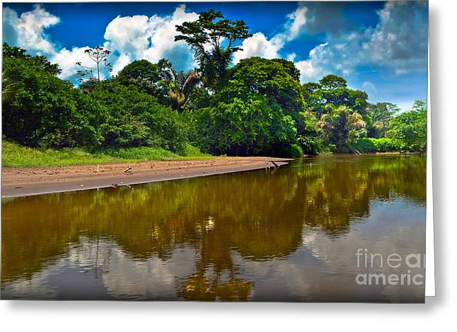 Biological Greeting Cards - Tortuguero River Canals Greeting Card by Gary Keesler