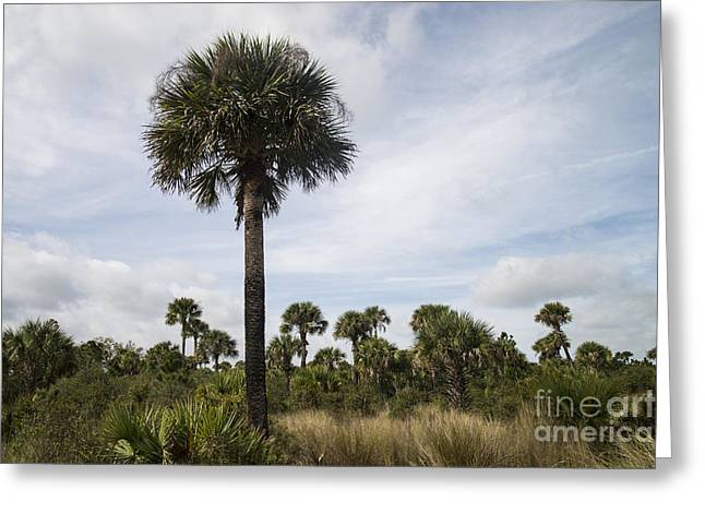 Us Destinations Greeting Cards - Tosohatchee Wildlife Management Area Greeting Card by Mark Newman