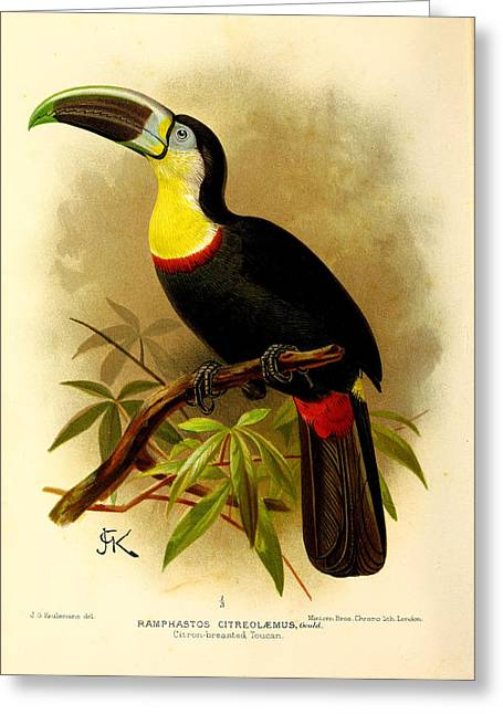 Toucan Greeting Card by J G Keulemans