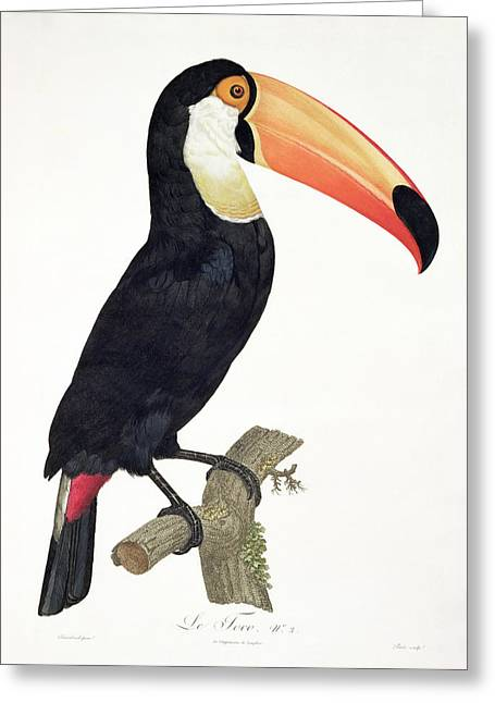 Toucan Greeting Card by Jacques Barraband