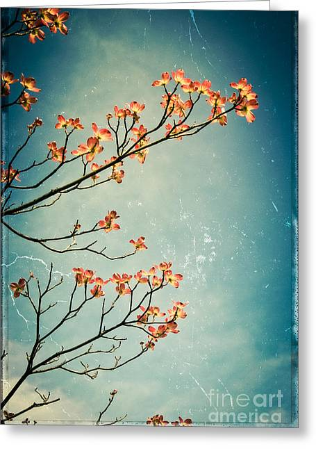 Altered Photograph Greeting Cards - Touch the Sky Greeting Card by Colleen Kammerer