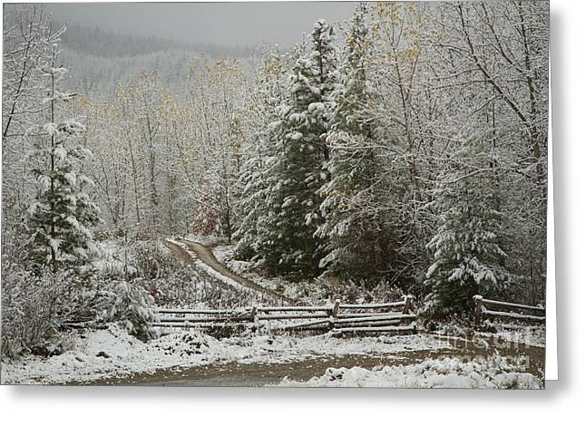 North Idaho Greeting Cards - Touched by Winter Greeting Card by Idaho Scenic Images Linda Lantzy
