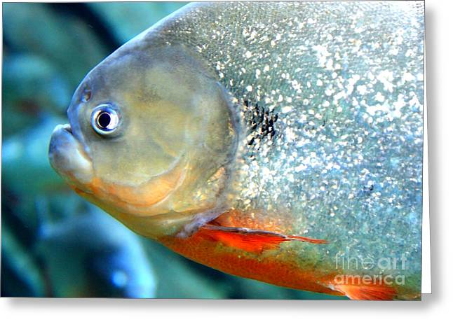 Fish Scales Greeting Cards - Tough Guy  Greeting Card by Carol Groenen