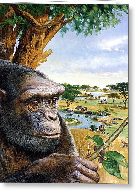 Origins Of Life Greeting Cards - Toumai Sahelanthropus Tchadensis Greeting Card by Publiphoto