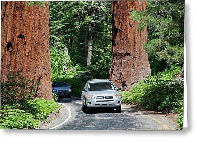 Tourism In Sequoia National Park Greeting Card by Jim West