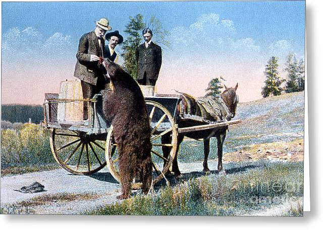 Horse And Buggy Greeting Cards - Tourist Feeding Bear Yellowstone Np Greeting Card by NPS Photo Frank J Haynes