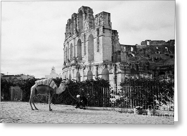 African Heritage Greeting Cards - Tourist Trap Old Man With Camel On Approach To The Old Colloseum From Tourist Car Park El Jem Tunisia Greeting Card by Joe Fox