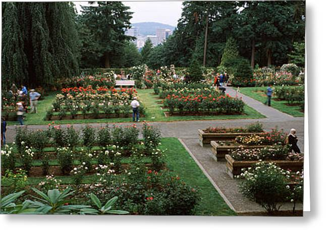 Medium Flowers Greeting Cards - Tourists In A Rose Garden Greeting Card by Panoramic Images