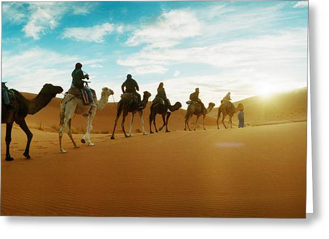 Medium Group Of People Greeting Cards - Tourists Riding Camels Greeting Card by Panoramic Images