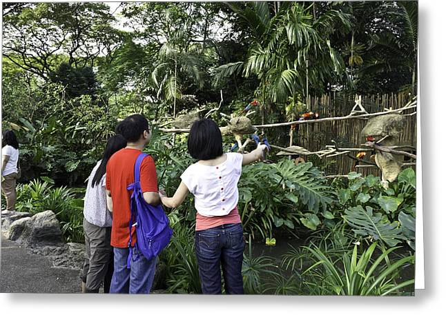 Bamboo Fence Greeting Cards - Tourists viewing the colorful birds Greeting Card by Ashish Agarwal