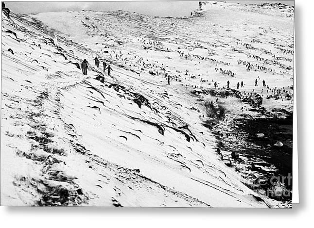 Shore Excursion Greeting Cards - tourists walking along ridge at hannah point penguin colony Antarctica Greeting Card by Joe Fox