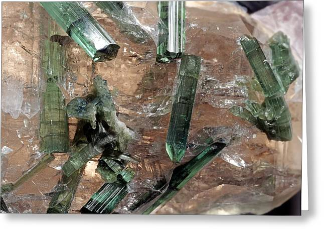 Silica Greeting Cards - Tourmaline crystals in quartz Greeting Card by Science Photo Library