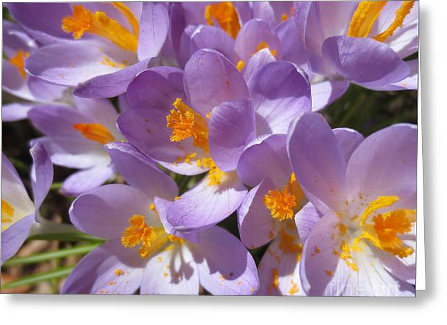 Tenderly Greeting Cards - Tout doux // Crocus // Light and Soft Greeting Card by Dominique Fortier
