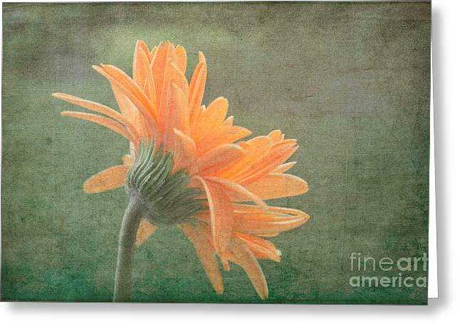 Organe Greeting Cards - Toward The Light Greeting Card by Arlene Carmel