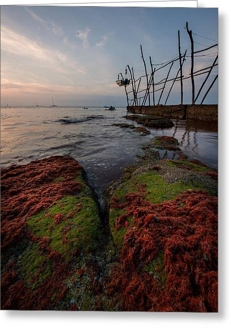 Alga Greeting Cards - Towards the night Greeting Card by Davorin Mance