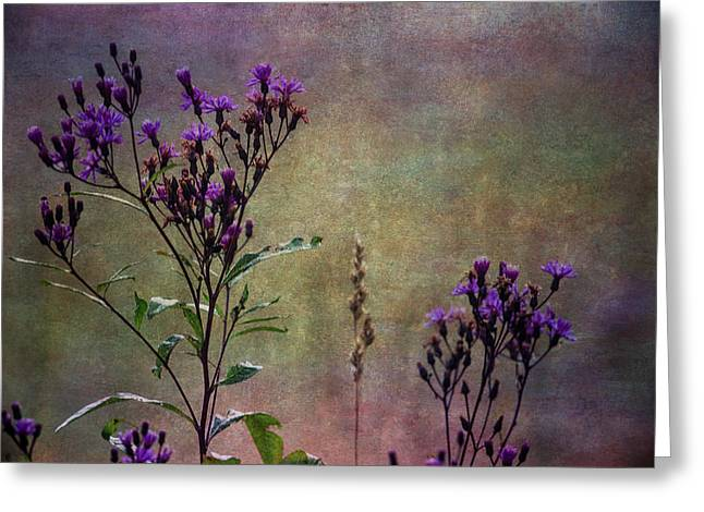 Asters Greeting Cards - Towering Above The Meadows Greeting Card by Dale Kincaid