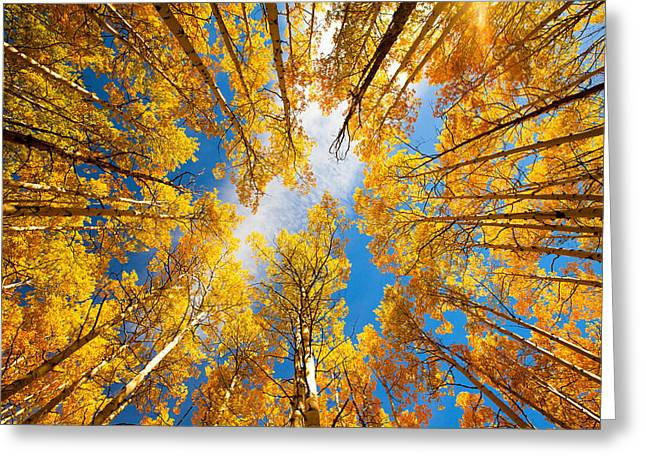 Autumn Prints Greeting Cards - Towering Aspens Greeting Card by Darren  White