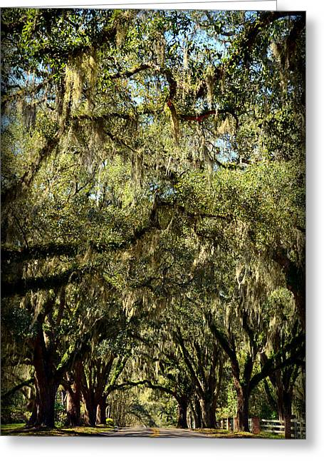 Carla Parris Greeting Cards - Towering Canopy Greeting Card by Carla Parris