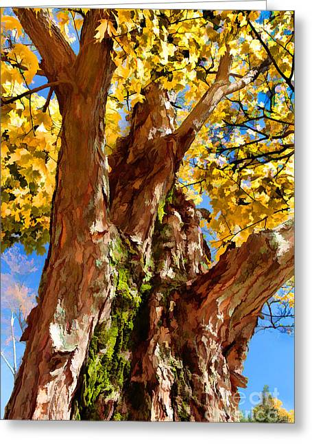 Paint Photograph Greeting Cards - Towering Giant Greeting Card by Dan Carmichael