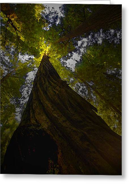 California Art Greeting Cards - Towering Giants Greeting Card by Kandy Hurley