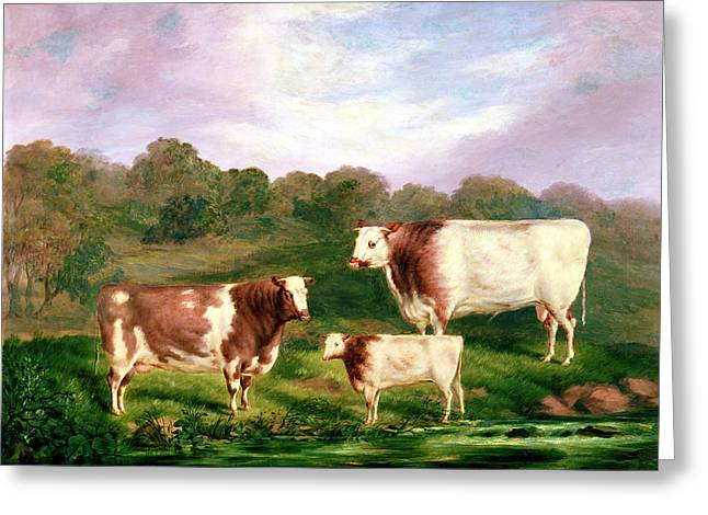 Breeds Greeting Cards - Towneley Pedigrees, 1858-61 Greeting Card by Henry Barraud