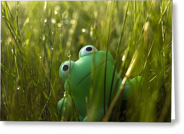 Frogs Photographs Greeting Cards - Toy Frog In The Wet Grass Greeting Card by Bernard Jaubert
